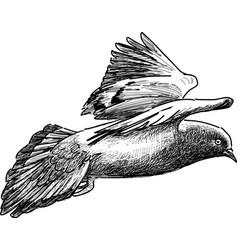 Flying pigeon vector