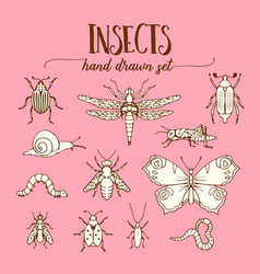 insects vintage set of hand drawn doodle sketch vector image