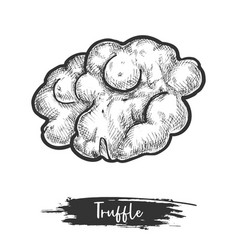 Isolated truffle design vector