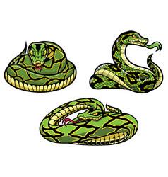 Snakes on white vector