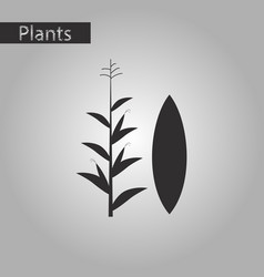 Black and white style icon of zea mays vector