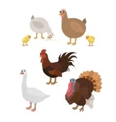 Cartoon set chicken cock chickens goose turkey vector