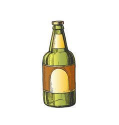 hand drawn classic color bottle of beer vector image