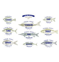 Hand drawn of fish with names in vector
