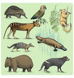 set australian animals engraved hand drawn vector image