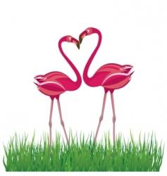 flamingo in love vector image