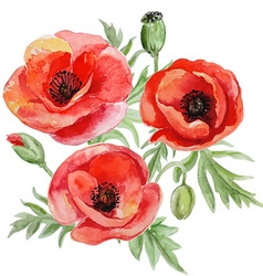 Bouquet red watercolor poppy flowers vector