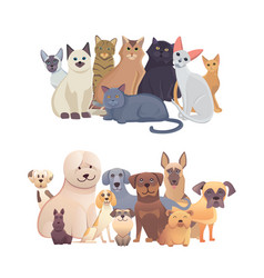 Cats and dogs border set front view pets vector