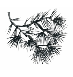 Coniferous branch with pine cones vector image