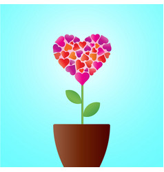 Flower in the form of heart in flower pot vector