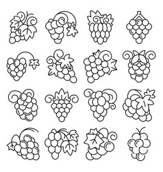 grape fruit icon set outline style vector image