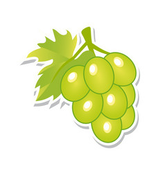 green grapes sweet fruit isolated berries on vector image