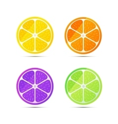 Set of glossy fruit slices on white vector image vector image