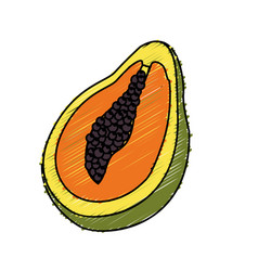 Delicious pawpaw tropic fruits vector