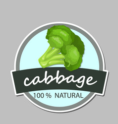 fresh green cabbage vegetable isolated cabbage vector image vector image
