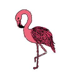 Beauty and exotic flamingo bird animal vector