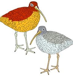 Eurasian Curlew bird vector
