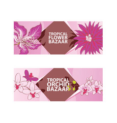 tropical flower orchid bazaar vector image