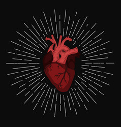 Abstract red human heart vector