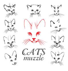 cats muzzle set vector image