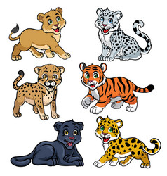 collection of babies big cats vector image