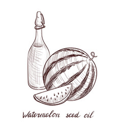 drawing watercmelon seed oil vector image