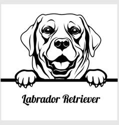 labrador retriever - peeking dogs - - breed face vector image