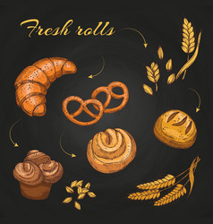 rolls and buns on blackboard chalkboard bakery vector image