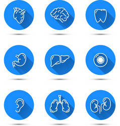 white outline icons humans organs on blue vector image