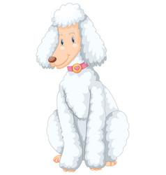 White poodle dog sitting vector