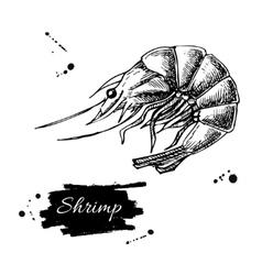 vintage shrimp drawing Hand drawn vector image vector image
