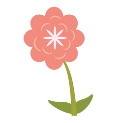 Canna flower decoration image vector