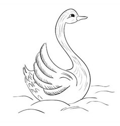 hand drawn swan vector image