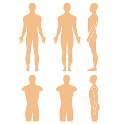 Male mannequin outlined silhouette torso vector image vector image