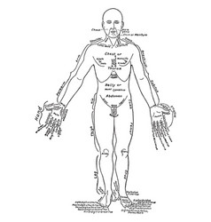 Front view of the parts of the human body labeled vector