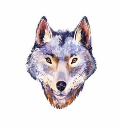 watercolor wolf portrait wild animal vector image