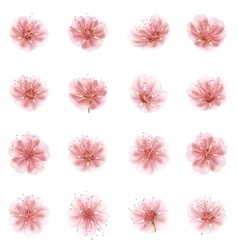Set of Sakura flowers EPS 10 vector image vector image