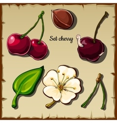 Cherry icon set berry flower and more six items vector image vector image