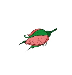 pink bud hand drawing roses vector image