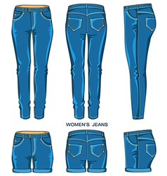 Women jeans pants and shorts vector image vector image