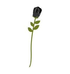 Black rose isolated rare dark flower on white vector