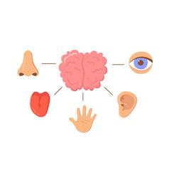 Brain and human senses organ set nose ear hand vector