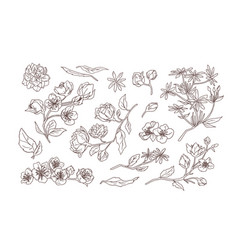 bundle elegant detailed natural drawings of vector image