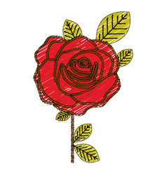 color pencil drawing of flowered red rose with vector image