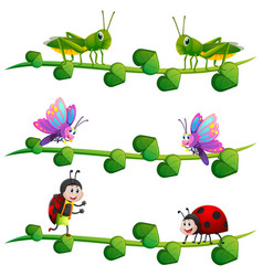 different types of insects on vine vector image