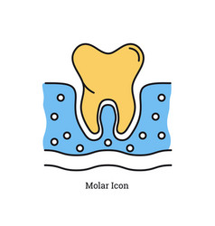 Linear isolated icon - molar icon vector
