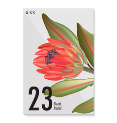 macro wild protea flower exotic tropical african vector image