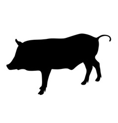 wild boar black silhouette on white background of vector image