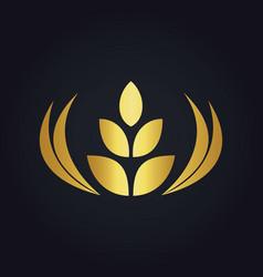 wheat abstract food tree gold logo vector image vector image