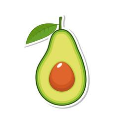 avocado fruit isolated fruit on white background vector image